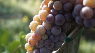 Vins de Fruit