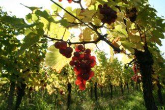 Vins Rouges et Rosés